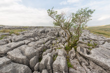 Clints And Grykes In Limestone Pavement At Malham In The Yorkshire Dales.