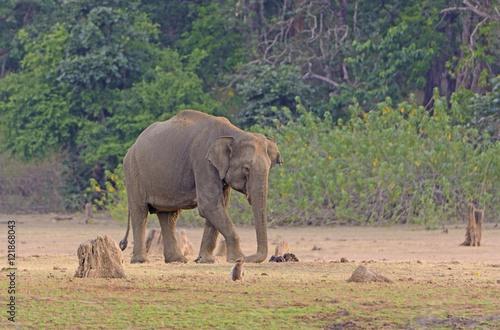 Aluminium Prints Elephant Elephant on Dusty Flood Plain