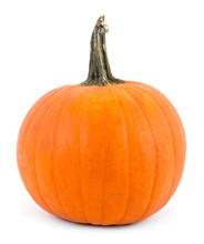 Perfect Pumpkin Over White