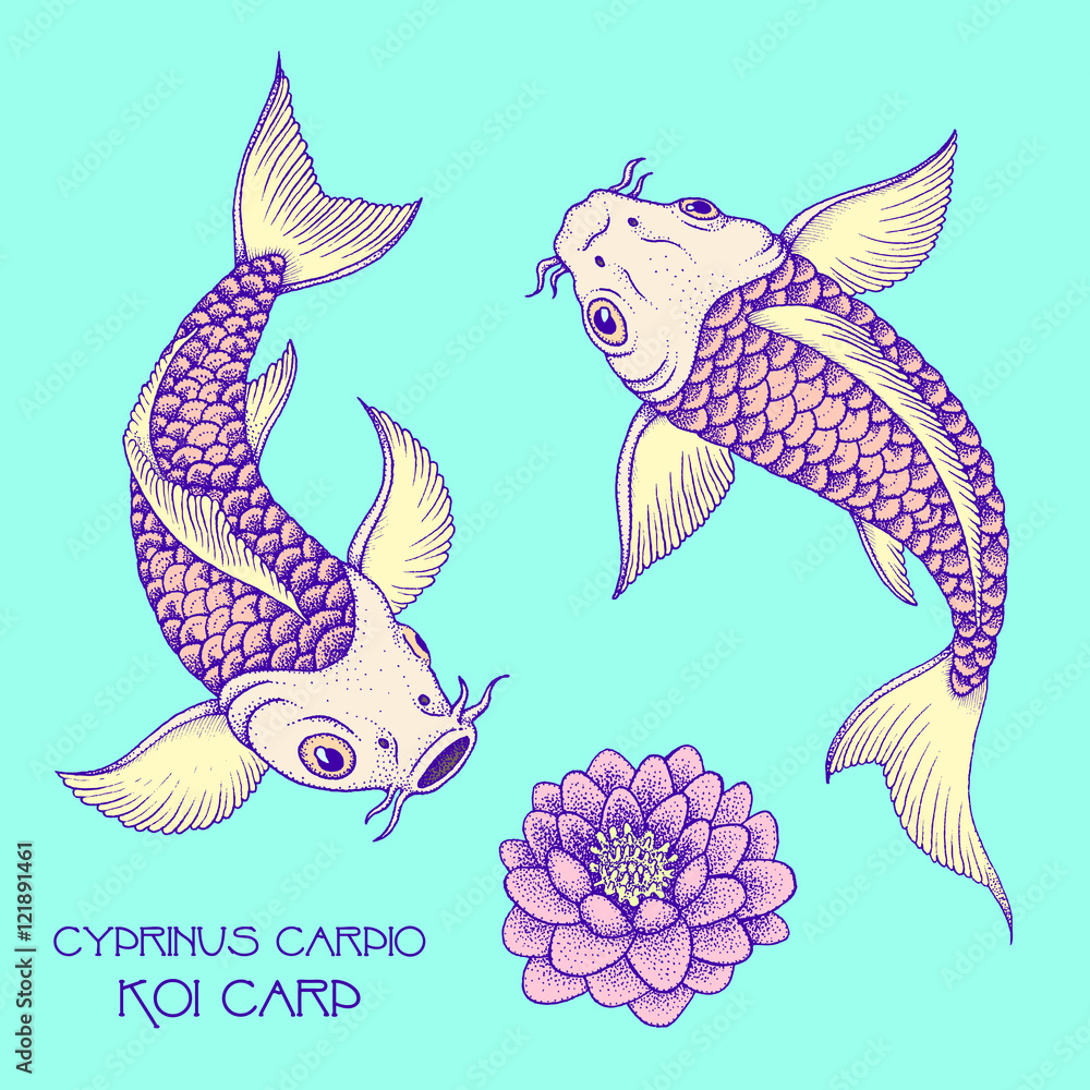 Japanese Fancy Carp. Hand drawn ink vector illustration