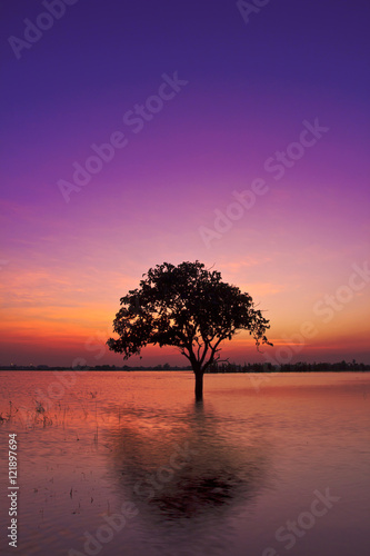 Spoed Foto op Canvas Violet Twilight sunset sky reflect on the water with silhouette tree landscape
