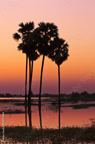 Deurstickers Oranje eclat Twilight sunset sky with palm tree silhouette landscape