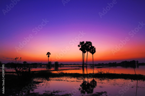 Spoed Foto op Canvas Violet Silhouette twilight sunset sky with palm tree landscape