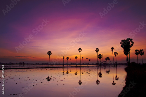 Foto op Aluminium Aubergine Silhouette twilight sunset sky reflect on the water with palm tree landscape