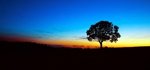Sunset under the tree.