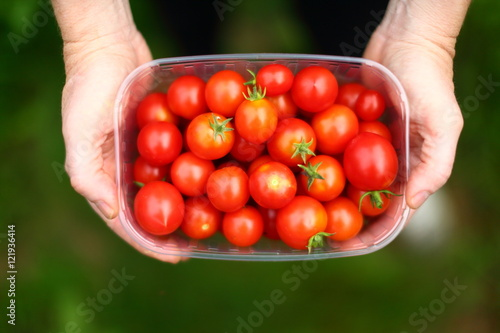Fotografie, Obraz  vitamins/ two hands holding a bowl of small tomatoes