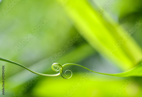 Poster Spirale Abstract leaf spiral close-up in a blurred background