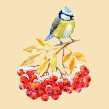 Titmouse Bird And Ashberry