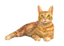 European Shorthair Cat With Green Eyes, Red Tabby, Kitten Lies On White Background, Isolated, Hand Draw Watercolor Painting, Animal Illustration, Vintage
