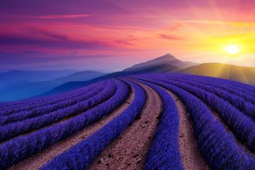 Panel Szklany Lawenda Lavender Beauty