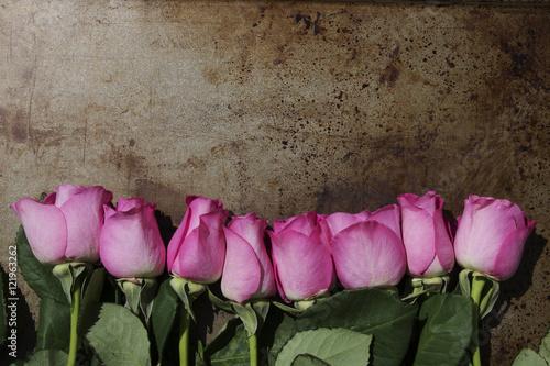 Fototapeta Pink Long Stem Roses lined along the bottom edge of a metal background obraz na płótnie
