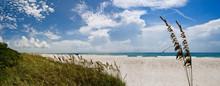 Coco Beach With Sea Oats