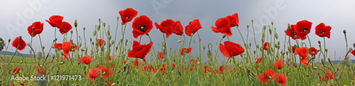 Canvas Prints Poppy Mohnblumen Feld Panorama