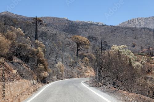 Fotografía  Terre brulée suite à un incendie