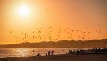 Seagulls At Beach, Sunset At Atlantic