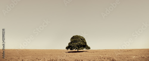 Fototapeta lone tree