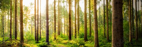 Fototapeta Gęsty las w czasie zachodu słońca na zamówienie