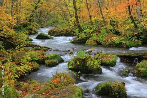 Fototapeten Forest river 青森県十和田 紅葉の奥入瀬渓流
