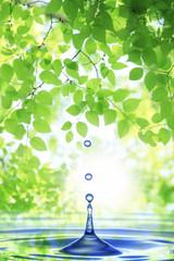 Obraz 新緑と水滴