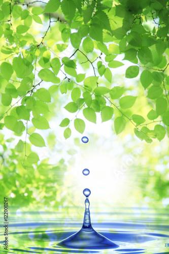 新緑と水滴 - 122000267