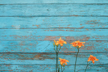 Tiger Lily On A Blue Wooden Shabby Background With Copy-space. Cute And Colorful Texture Perfect For Banners Or Cards