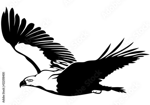 Black and White Flying Eagle - Outline Illustration, Vector