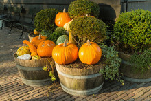 Pumpkins And Fall Harvest Deco...