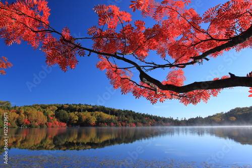 Plakat Jezioro pokryte jesiennych liści