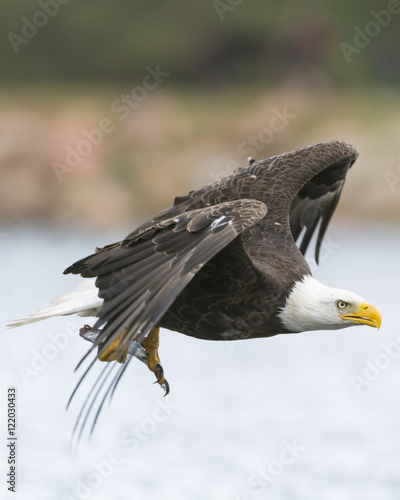 Eagle - Buy this stock photo and explore similar images at Adobe ...