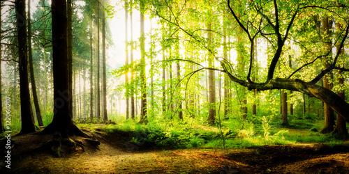 Foto op Aluminium Bossen Sonnenaufgang im Wald an einem verträumten Morgen im Herbst