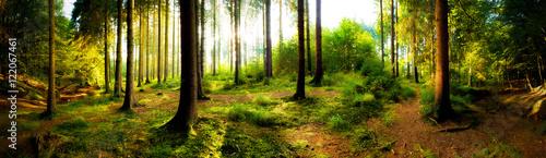 Fotobehang Bossen Sonnenaufgang im Wald an einem verträumten Morgen im Herbst