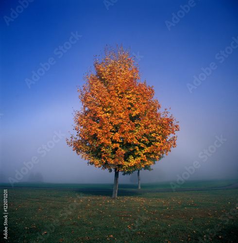 Tree On Grassy Field In Foggy Weather During Autumn