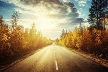 Road In North Forest In Autumn Time