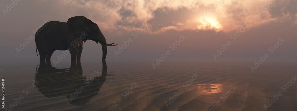 Fototapeta elephant and sunset