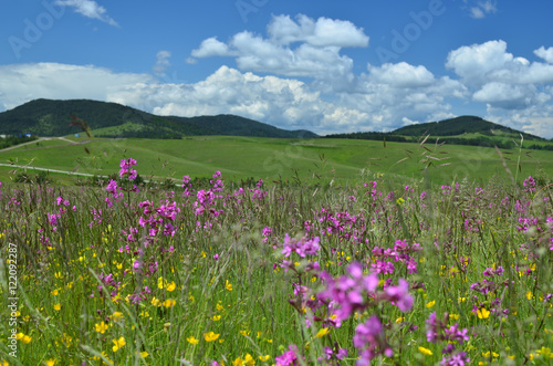 Foto auf Gartenposter Hugel Springtime landscape of Zlatibor Mountain in Serbia, with pink and yellow wildflowers in a meadow and hills in background