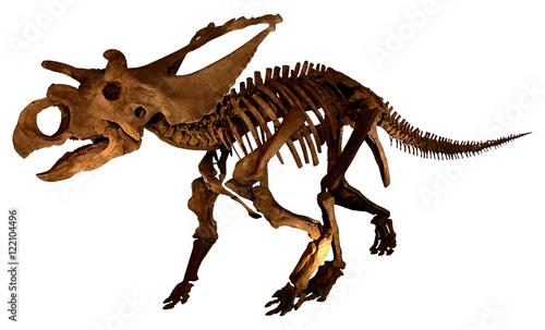 Photo  Dinosaur fossil (complete skeleton )