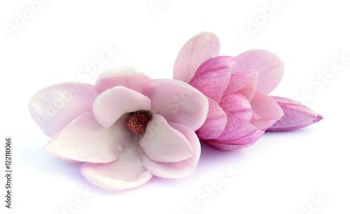 In de dag Magnolia magnolia flower