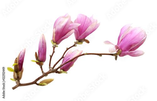 Deurstickers Magnolia pink magnolia