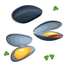 Mussels Vector Illustration Isolated On White Background