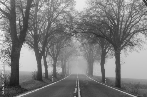 Foggy black and white landscape with trees standing along asphalt road