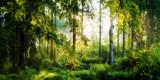 Fototapeta Las - Sonnenaufgang im herbstlichen Wald, verträumte Szene in den Morgenstunden