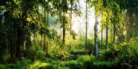 Panel Szklany Podświetlane Popularne Sonnenaufgang im herbstlichen Wald, verträumte Szene in den Morgenstunden
