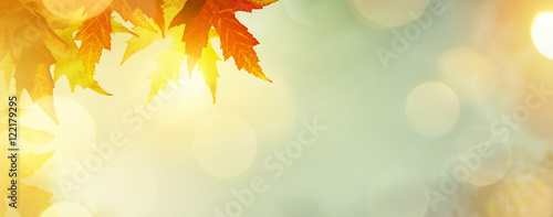 abstract nature autumn Background with yellow leaves