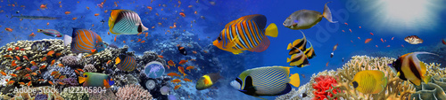 Photo Stands Dark blue Sea corals. Panorama