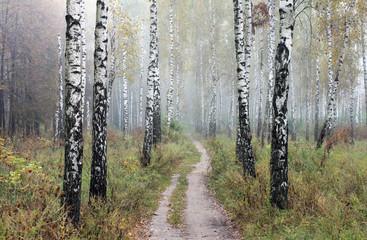 Fototapeta Skandynawski Grove of birch trees and dry grass in early autumn, fall panorama