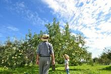 リンゴ畑のファミリー