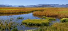 Chilly Slough Wetland Near Mackay Idaho