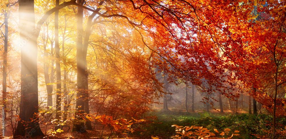 Fotografie, Obraz  Herbst im Wald, mit Lichtstrahlen im Nebel und rotem Laub