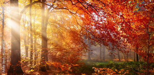 Foto op Plexiglas Bestsellers Herbst im Wald, mit Lichtstrahlen im Nebel und rotem Laub