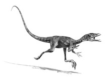 Compsognatus Dinosaur - 3d Ren...
